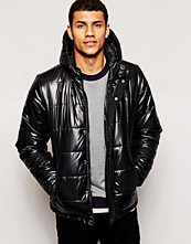 Jackor - Bellfield Padded Jacket With Hood In Wet Look