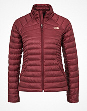 The North Face TONNERRO  Dunjacka deep garnet red