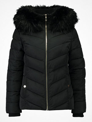 Miss Selfridge PUFFER   Vinterjacka black
