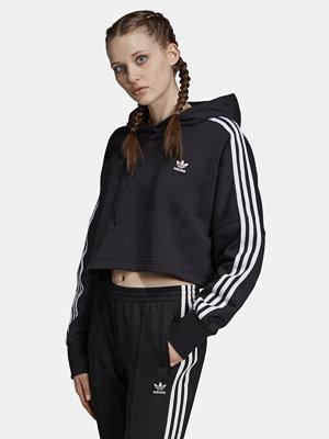 Street & luvtröjor - Adidas Originals Cropped Hood sweatshirt
