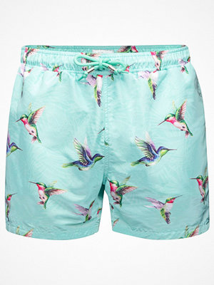 Badkläder - Panos Emporio Hummingbird Apollo Swim Shorts Mint green