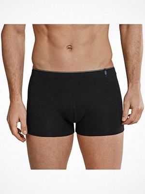Schiesser 95-5 Shorts 3XL-6XL Black